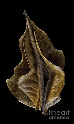 Photograph - Dry Magnolia Leaves by Walt Foegelle