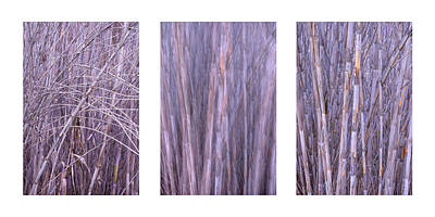 Photograph - Dry Reed Collage by Alexander Kunz
