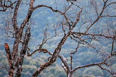 Photograph - Dry Tree Branches In The Jungles by Jenny Rainbow