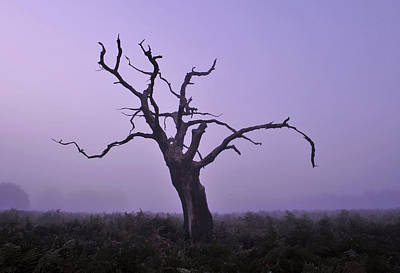 Photograph - Dry Tree In Fog by Marek Stepan