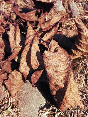 Photograph - Dry Walnut Leaves by Erika H