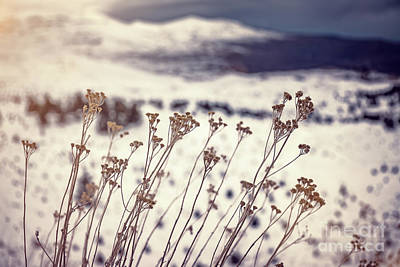 Photograph - Dry Wildflowers In The Winter by Anna Om