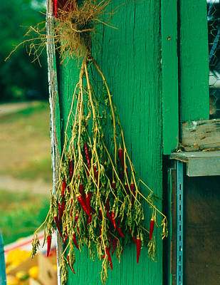 A2 Photograph - Drying Chili Peppers Rinconada Nm by Troy Montemayor