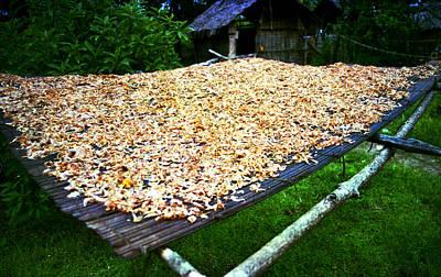 Photograph - Drying Crayfish by Muyiwa OSIFUYE