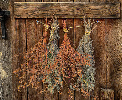 Photograph - Drying Herbs Hanging On A Wooden Door by Jim Pavelle