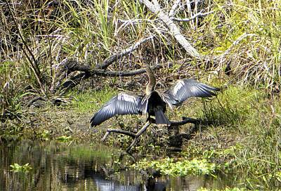 Photograph - Drying It Wings by Ric Schafer