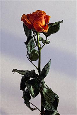 Drying Rose Art Print by Robert Ullmann