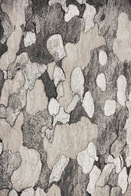 Photograph - Bark Of A Sycamore  2tone by Theo O'Connor
