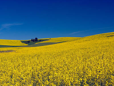 Photograph - Dt816palouse by Leland D Howard