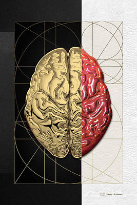 Dualities - Half-gold Human Brain On Black And White Canvas Original by Serge Averbukh