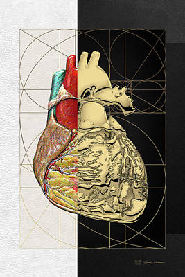 Dualities - Half-gold Human Heart On Black And White Canvas Original by Serge Averbukh