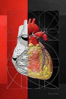 Digital Art - Dualities - Half-silver Human Heart On Red And Black Canvas by Serge Averbukh