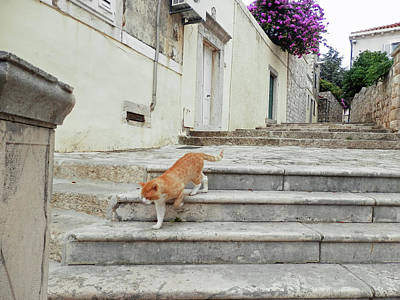 Photograph - Dubrovnik Stray Cat 1 by Pema Hou