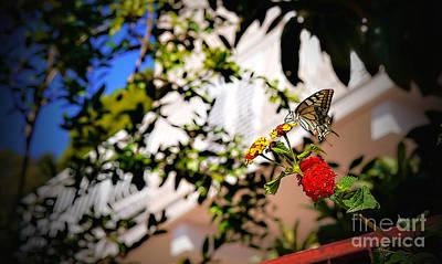 Photograph - Dubrovniks Butterfly by Lance Sheridan-Peel