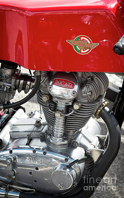 Bologna Photograph - Ducati 250 Single by Tim Gainey