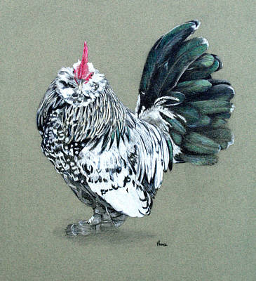 Chooks Drawing - D'uccle Cockerel by Vicky Prince