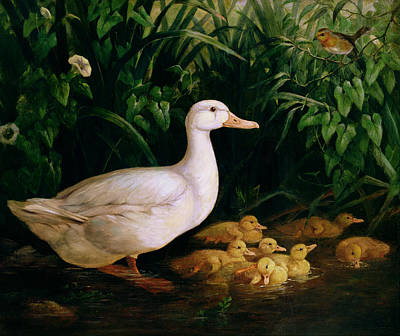 Ducklings Painting - Duck And Ducklings by English School