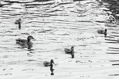 Photograph - Duck And Ducklings by Steven Green
