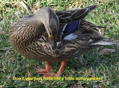 Duck Annoyances Art Print by Rana Adamchick