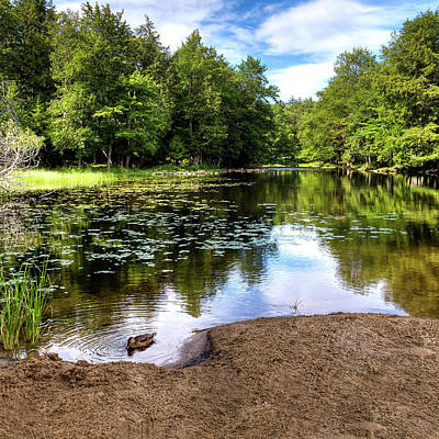 Photograph - Duck At Covewood by David Patterson