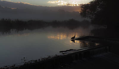Photograph - Duck At Dawn by Ian Merton