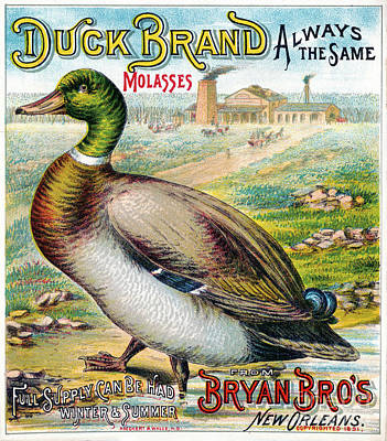 Drawing - Duck Brand Molasses.  by Granger