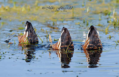 Photograph - Duck Butts by Mike Fitzgerald