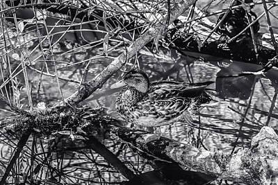 Photograph - Duck Bw 3 by Robert Hebert