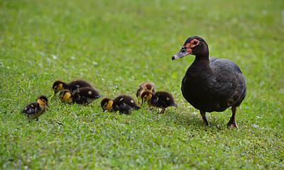 Photograph - Duck Children by rd Erickson