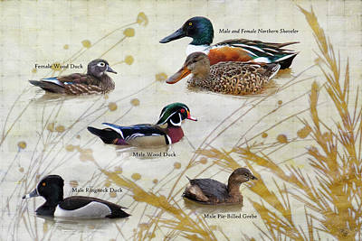 Digital Art - Duck Collage 1 by Ron Grafe