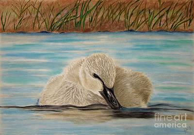 Wall Art - Painting - Duck  by Cybele Chaves