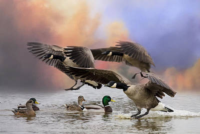 Photograph - Duck Ducks 2 by Randy Hall