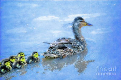 Baby Mallards Digital Art - Duck Family Swim by Randy Steele