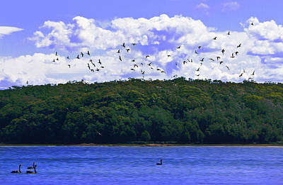 Photograph - Duck Flying Over The Lake by Miroslava Jurcik