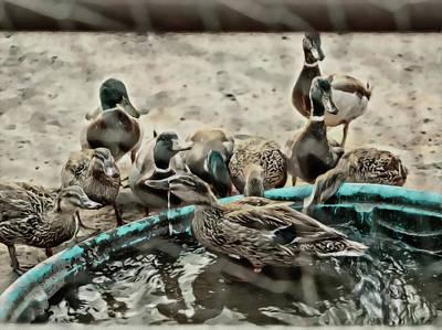 Photograph - Duck Fun by Philip A Swiderski Jr