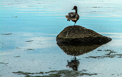 Photograph - Duck Gymnastics by Alex Galkin