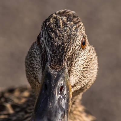 Photograph - Duck Headshot by Jacek Wojnarowski