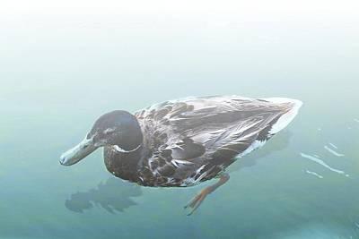 Digital Art - Duck In The Mist by Ellen Barron O'Reilly