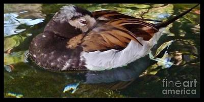 Photograph - Duck Nap by Susan Garren