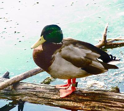 Photograph - Duck On A Log by Stephanie Moore