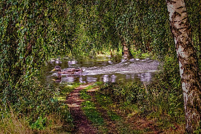 Photograph - Duck On Path #g7 by Leif Sohlman