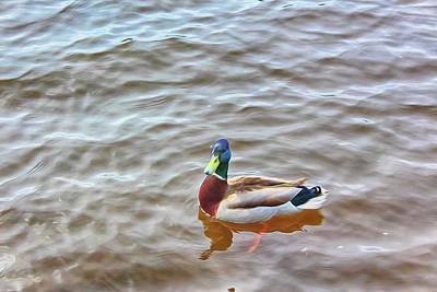 Drawing Digital Art - Duck On Water by Tatiana Tyumeneva