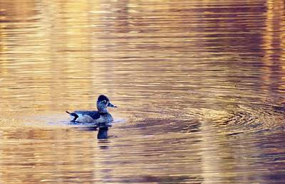 Photograph - Duck Pond 3 by Buddy Scott