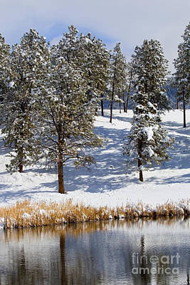 Steven Krull Royalty-Free and Rights-Managed Images - Duck Pond in Colorado Snow by Steven Krull