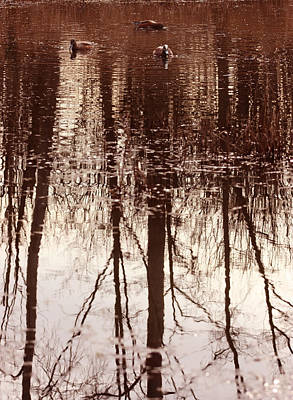 Photograph - Duck Pond Reflections by Barbara  White