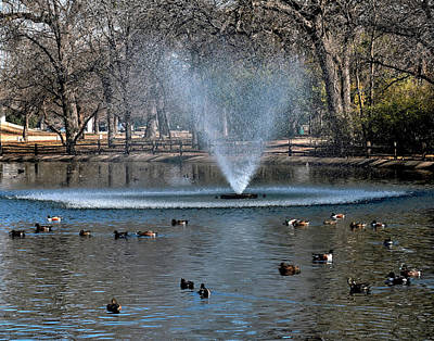Photograph - Duck Pond by Robert Brown