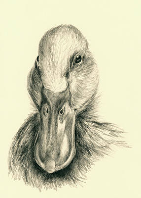 Waterfowl Drawing - Duck Portrait In Charcoal by MM Anderson