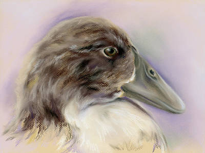 Pastel - Duck Portrait In Gray And Brown by MM Anderson
