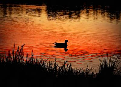Photograph - Duck Silhouette by Patricia Strand