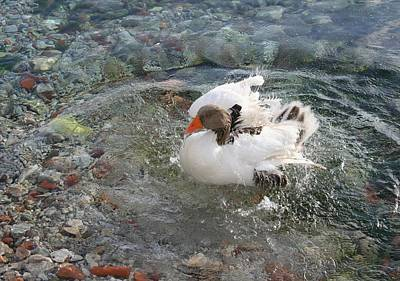 Photograph - Duck Splashing Water Creating Ripples On Riverbank by Tracey Harrington-Simpson